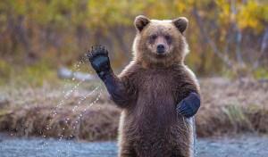 14449640176327-silly-bears-1